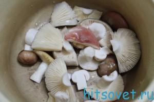 промытые грибы
