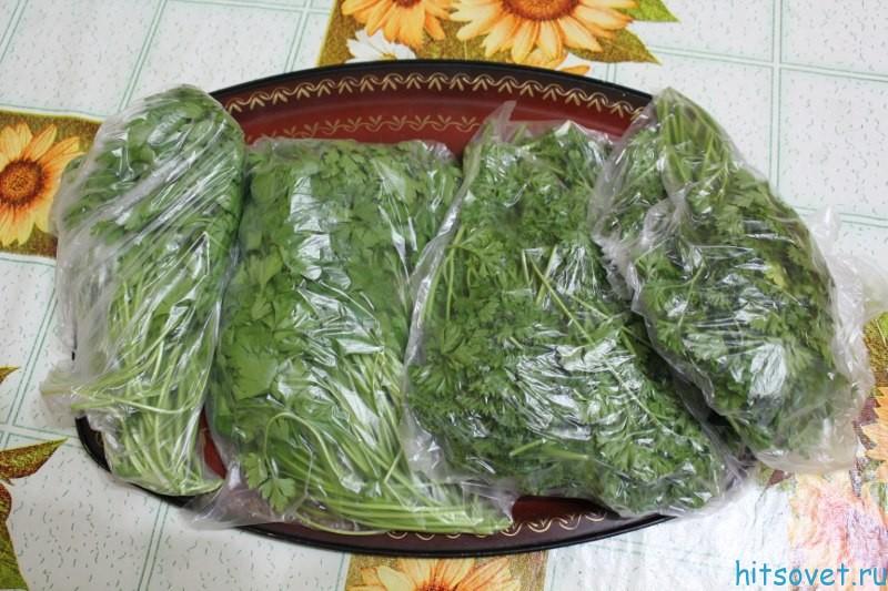 рецепты засолки и салатов из огурцов на зиму